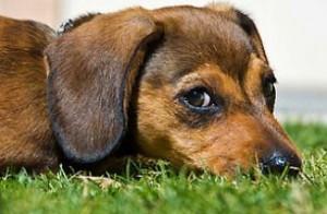 Étellel ártani is lehet a kutyának