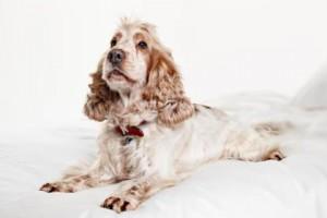 Kutya emésztőrendszeri betegség