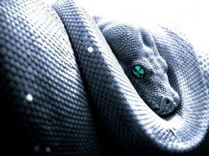 Kígyó álom
